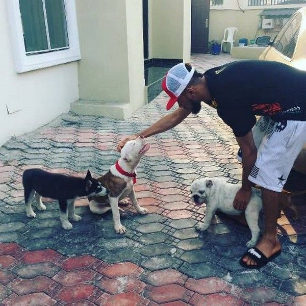 Phyno-playing-with-dogs