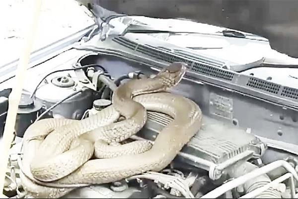 a snake in the engine compartment