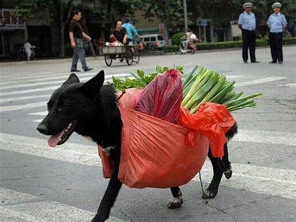 dog-carrying-groceries