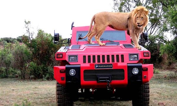 lion-on-marauder