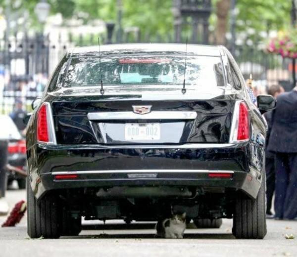 Larry-cat-under-Donald-Trump-beat-limo-01