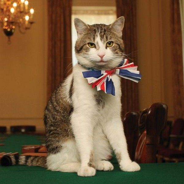 larry-the-downing-street-cat