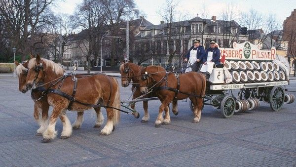 Horses-used-for-transporting-beer