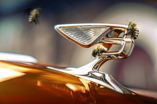 image-of-bentley-logo-and-bees