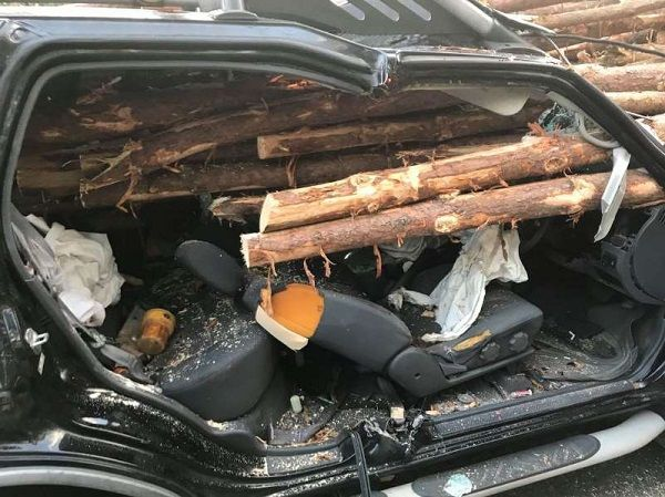 image-of-logs-o-wood-impaled-a-nissan-windshield