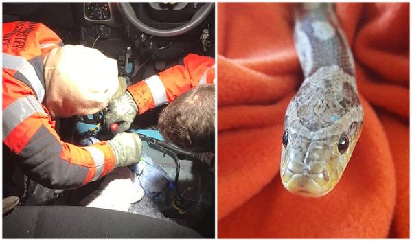 firefighters-rescuing-the-pet-snake