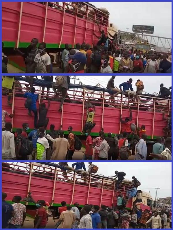 Lagos-security-personnel-intercepts-truck-conveying-60-illegal-travelers-hiding-behind-cows