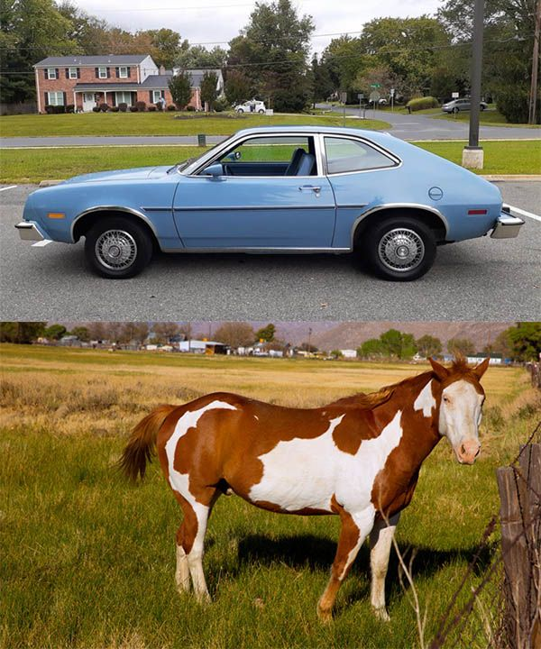 Ford-Pinto-car-and-Pinto-horse