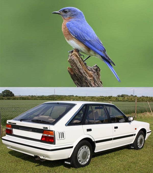 Nissan-Bluebird-car-and-Bluebird-animal