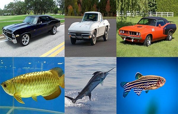 Cars-named-after-fish