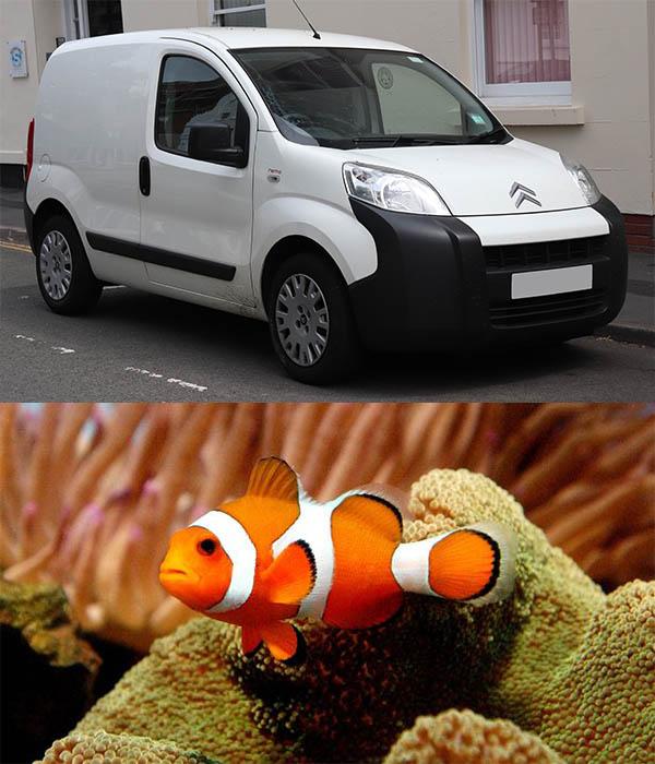 Citroen-Nemo-van-and-Ocellaris-clownfish