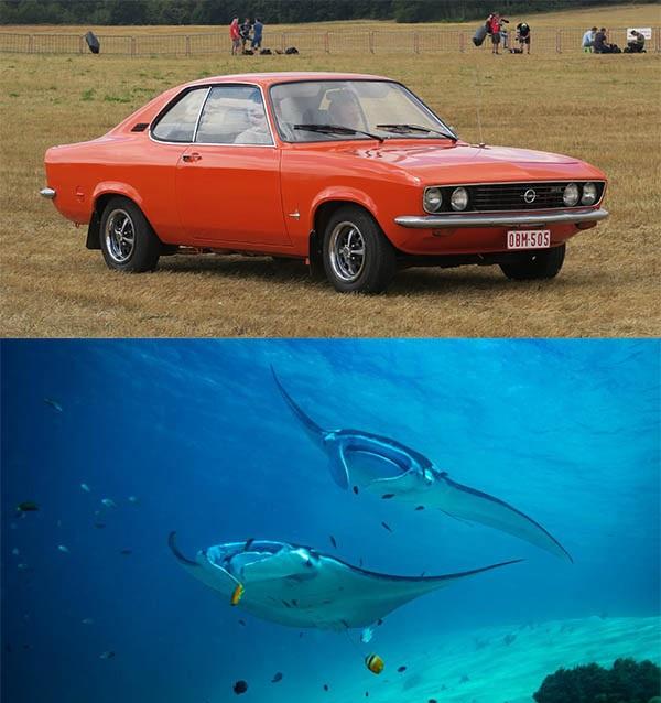 Opel-Manta-and-Manta-ray-fish