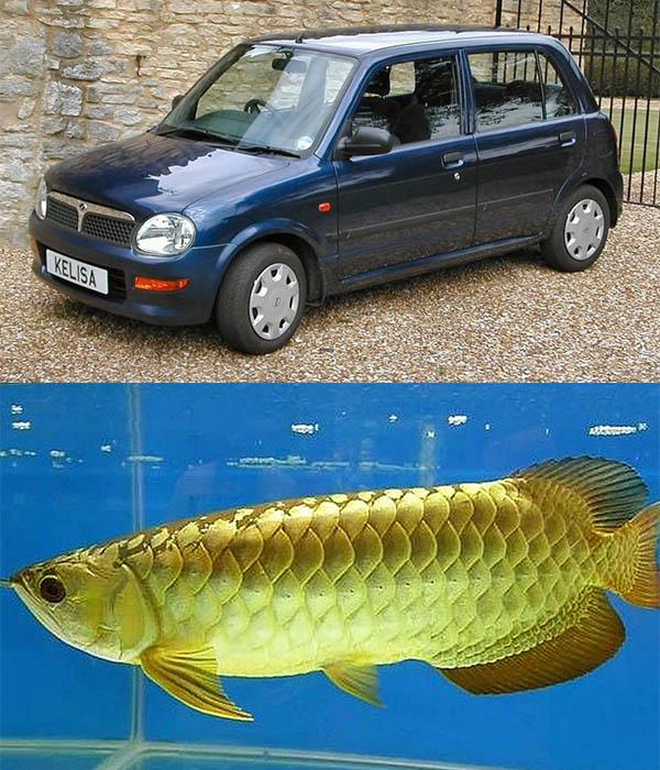 Perodua-Kelisa-car-and-Ikan-Kelisa-fish