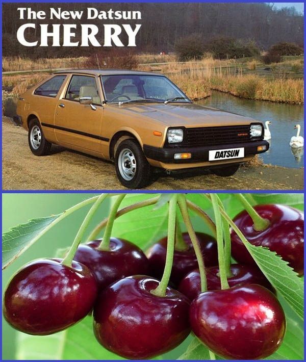 1981-Datsun-Nissan-Cherry-and-Cherry-fruit