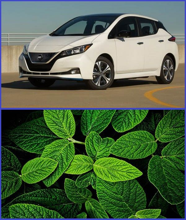 2020-Nissan-LEAF-and-green-leaves