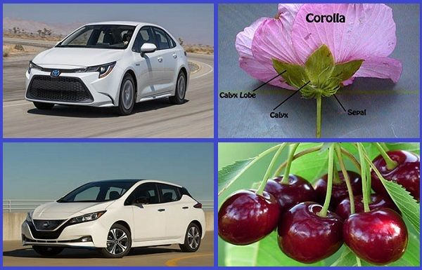 Cars-named-after-plants