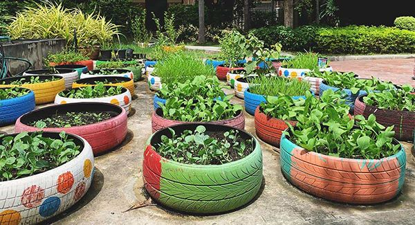 using-car-tyres-to-plant