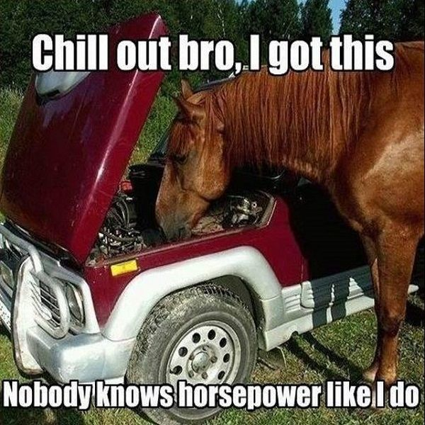 horse-in-car-engine