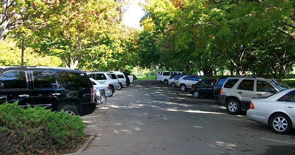 cars-parked-under-a-tree