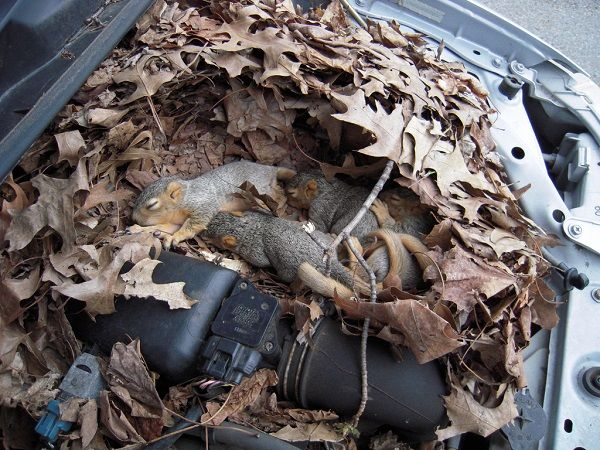 squirrel-in-car