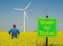 Biofuel: what you need to know?