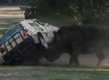 Zoo keeper emerged uninjured after angry rhino attacked & flipped her car 3 times