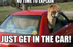 Top 10 most viral car memes