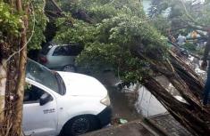 Many cars get under fallen trees after Port-Harcourt rainstorm
