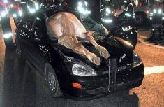 Unexplainable car accident compilation