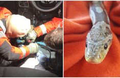 5-feet pet snake rescued after getting stuck in car gear stick