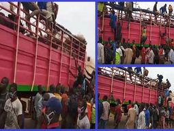 COVID-19: Lagos Security personnel intercepts truck with 60 men hidden amidst cows