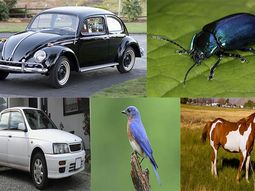 These 10 cars are named after animals (No. 2 & No. 10 are popular in Nigeria)