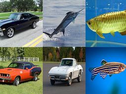 Top 10 cars named after fish
