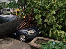 Wow! Driver narrowly escapes death as tree falls on his car in Lagos (Photos)